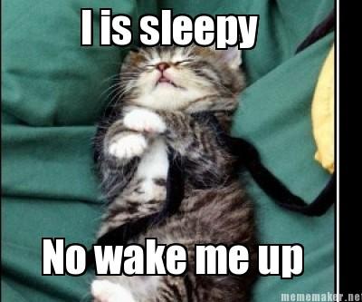 Sleepy Kitten Meme